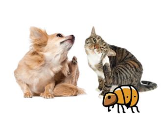 Honden en katten hebben last van vlooien